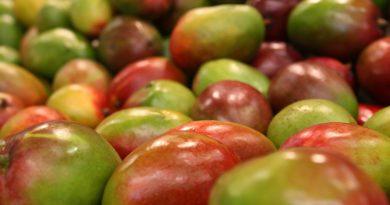 Comment choisir la bonne mangue ?
