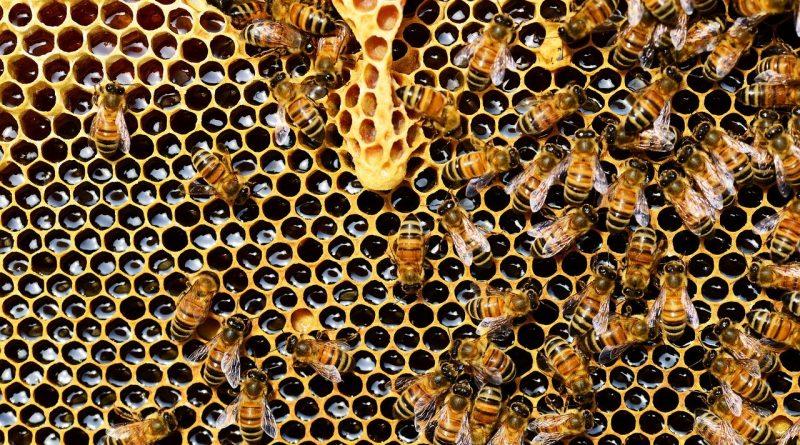 Pourquoi faut-il protéger les abeilles ? (et comment)